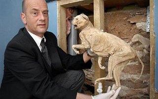 400 Yıllık Mumya Kedi
