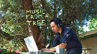 Ağaçtan Müzik