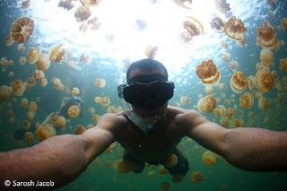Denizanası Gölü-Jellyfish Lake-Palau