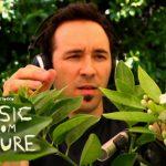Doğadan Müzik-Music from Nature