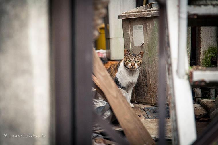 Japon Sokak Kedileri-12