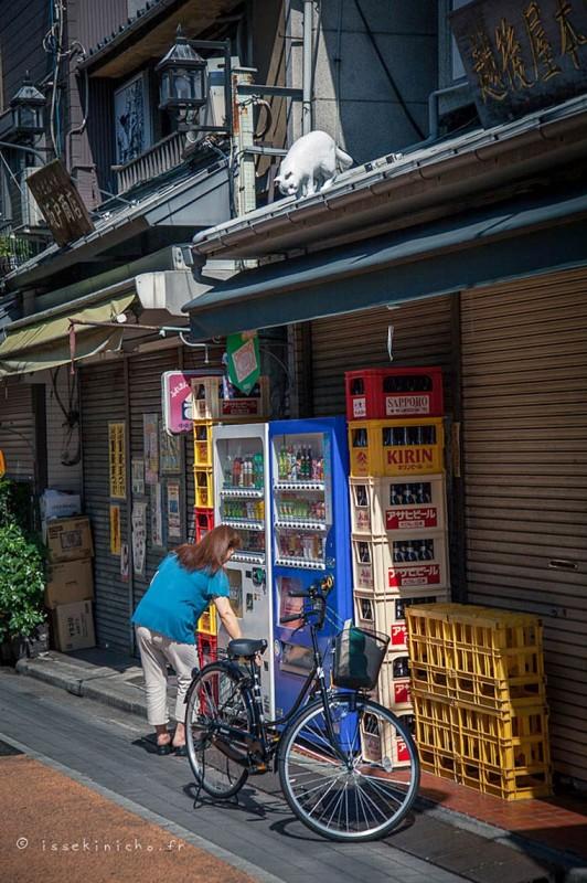 Japon Sokak Kedileri-13