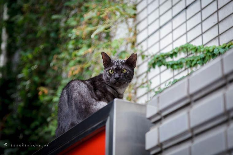 Japon Sokak Kedileri-15