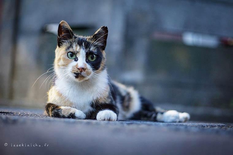 Japon Sokak Kedileri-16