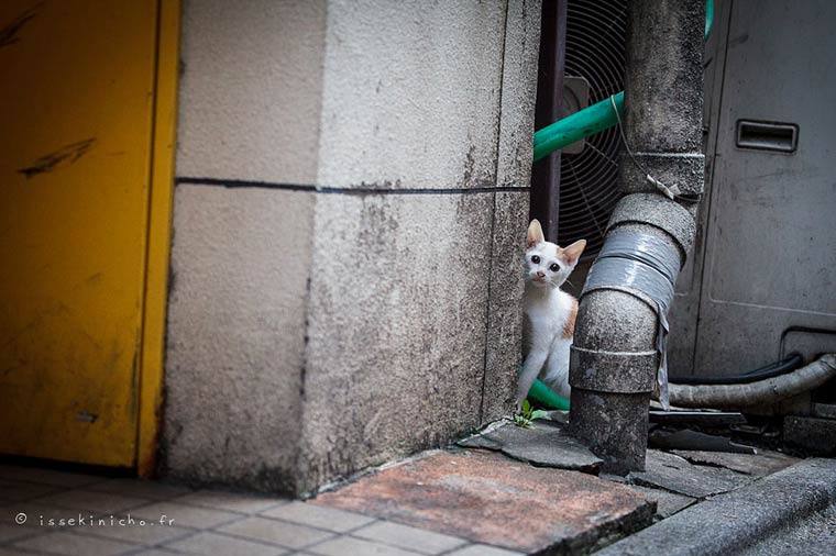 Japon Sokak Kedileri-17