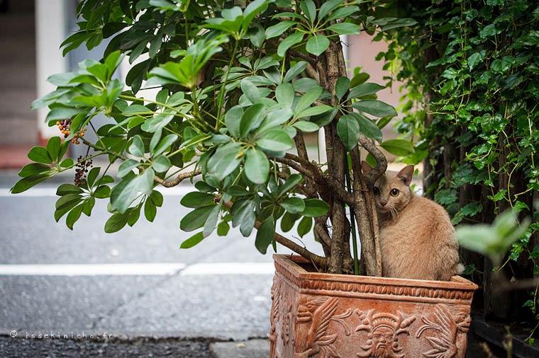 Japon Sokak Kedileri-18