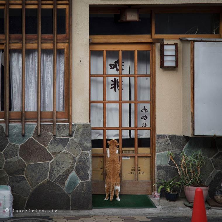 Japon Sokak Kedileri-19
