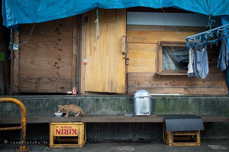 Japon Sokak Kedileri-20