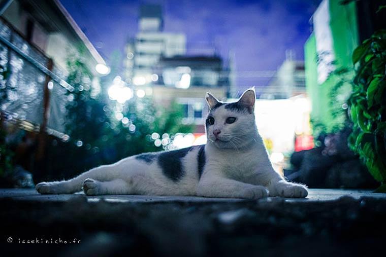Japon Sokak Kedileri-22