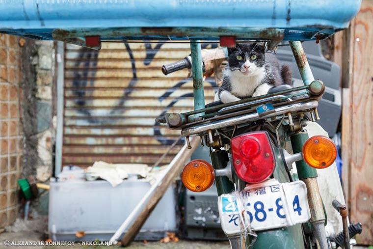 Japon Sokak Kedileri-23