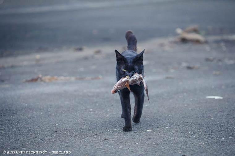 Japon Sokak Kedileri-3