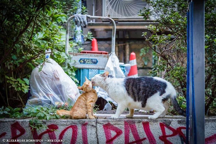 Japon Sokak Kedileri-4