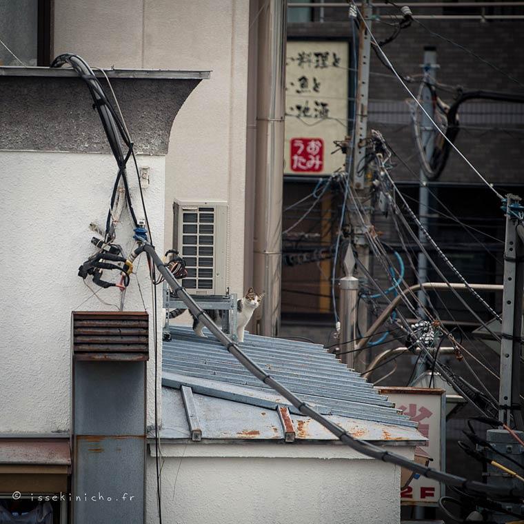 Japon Sokak Kedileri-5
