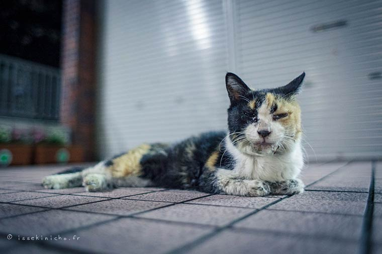Japon Sokak Kedileri-7
