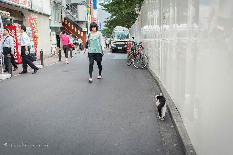 Japon Sokak Kedileri-8