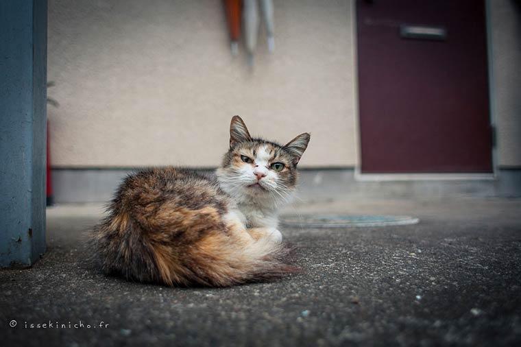Japon Sokak Kedileri-9