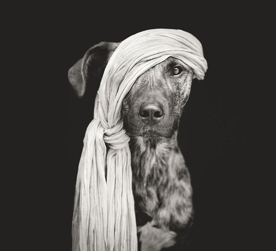 Köpek Portreleri-12