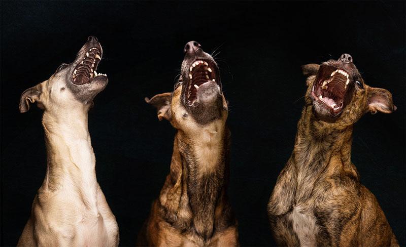 Köpek Portreleri-2