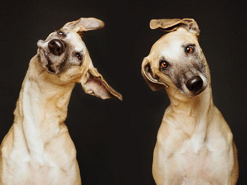 Köpek Portreleri-8