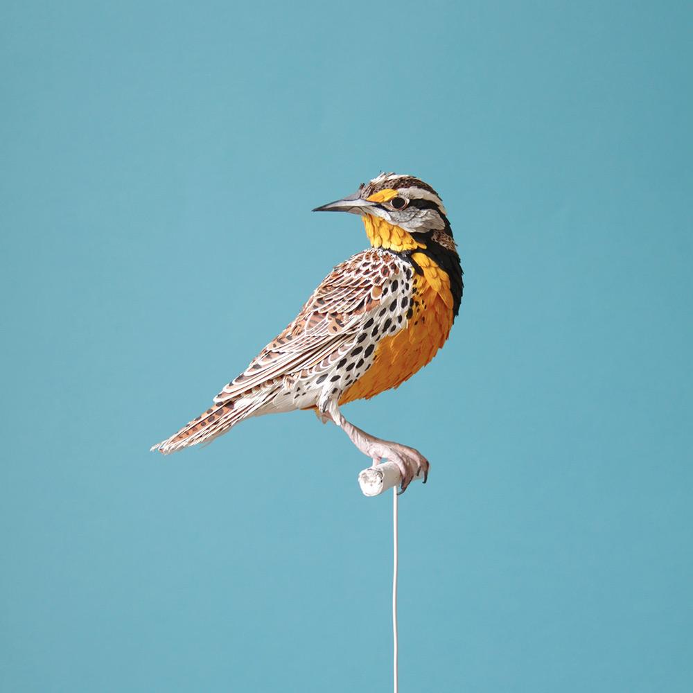 Kağıt Kuşlar-1