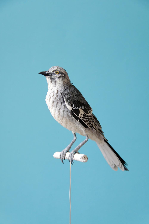 Kağıt Kuşlar-2