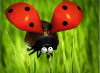 Uğurböceği-Ladybug