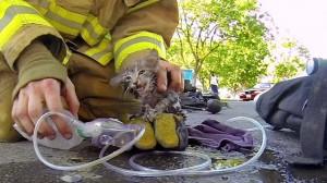 Yangından Kurtarılan Kedi