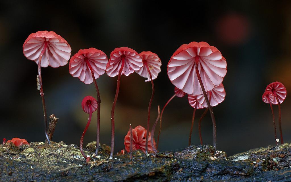 fantastic-fungi-steve-axford-1