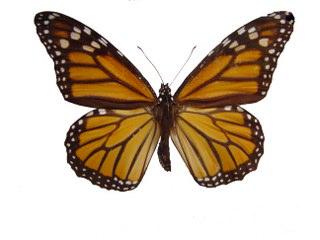 Bugün Pekin'de kanatlarını çırpan bir kelebeğin havada oluşturduğu dalgalar gelecek ay New York'ta fırtına sistemlerine dönüşebilir.