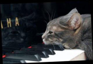Piyanist Kedi Nora