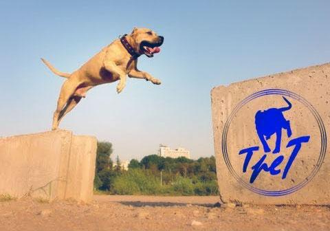 Parkour Dog TreT